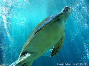 Guam Dive